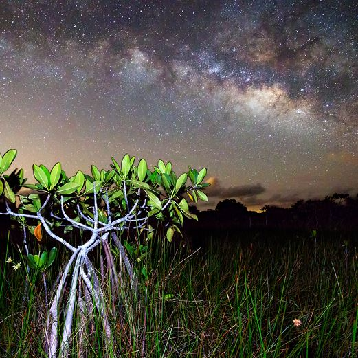 Everglades at Night